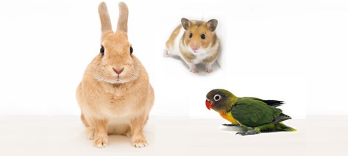 ウサギ・フェレット・ハムスター・小鳥など