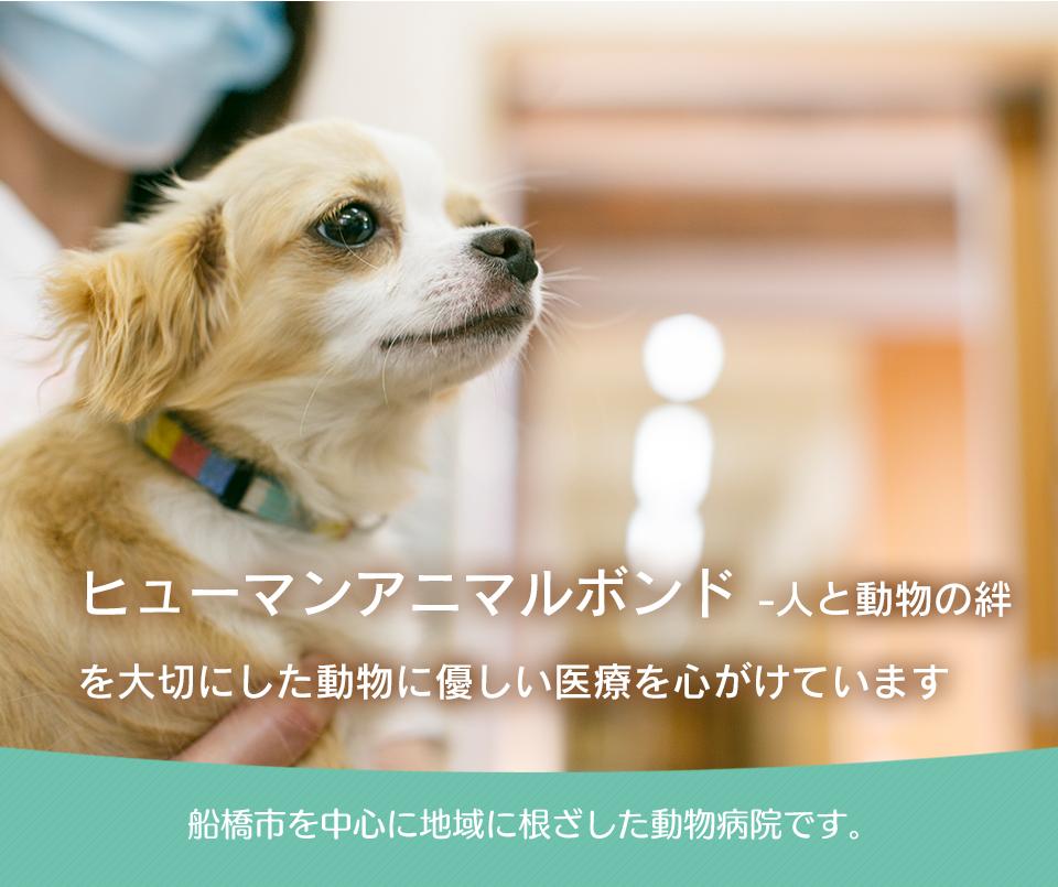 ヒューマンアニマルボンド-人と動物の絆-を大切にした動物に優しい医療を心がけています。