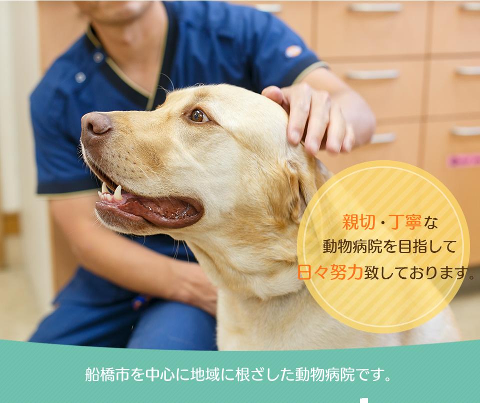 船橋市を中心に地域に根ざした動物病院です。